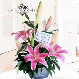 acapulco-diseño-pink-fortune