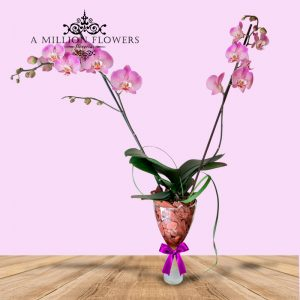 orquidea-diseño
