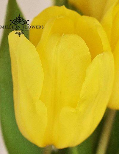 Acercamiento a tulipan del Arreglo floral of you